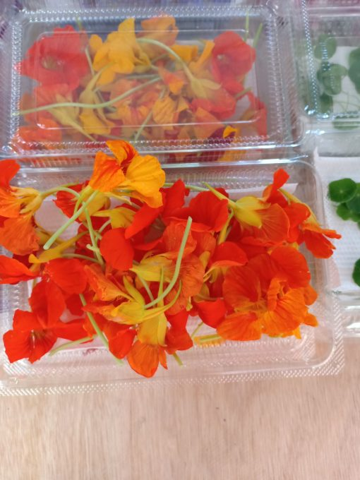 Nasturtium Edible Flowers
