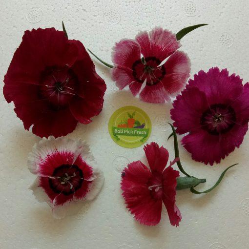 diantus flower