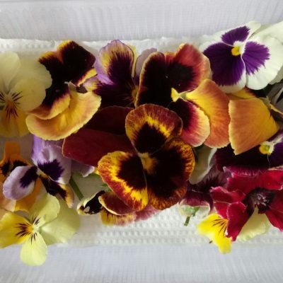 viola mix flower