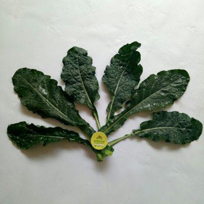 Kale Nerode Toscana